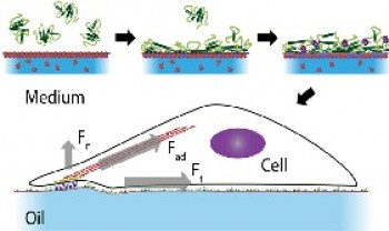 Protein Nanosheet Mechanics Controls Cell Adhesion and Expansion on Low-Viscosity Liquids